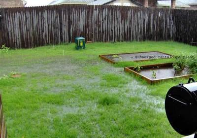 yard_rain2